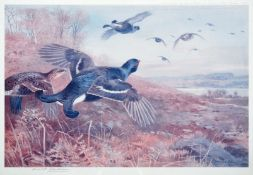 After Archibald Thorburn FZS (1860-1935) Black Grouse in flight Signed in pencil, a colour