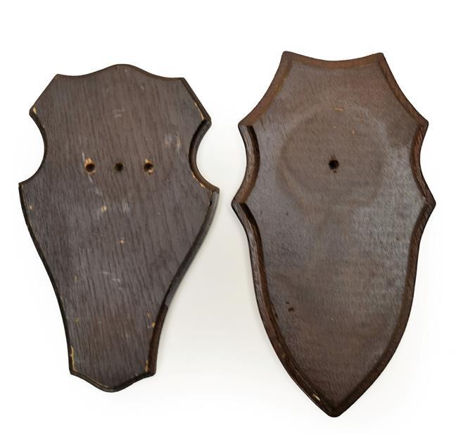 Taxidermy: Shields, thirty three similar dark oak shields, various sizes - average 11cm by 19cm,