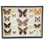 Entomology: A Cased Display of Tropical Butterflies, circa late 20th century, a wall hanging display