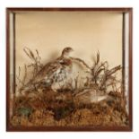 Taxidermy: A Victorian Cased Family of Ruffed Grouse (Bonasa umbellus), circa 1845-1856, by T.M.
