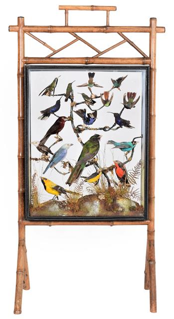 Taxidermy: A Late Victorian Diorama Firescreen of Tropical Birds, in the manner of Rowland Ward, 166