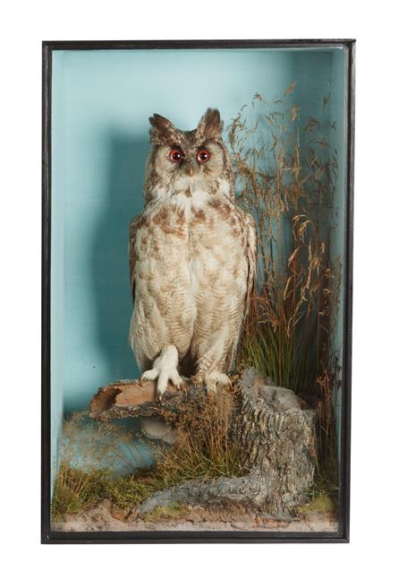 Taxidermy: A Cased Mid-Victorian Great Horned Owl (Bubo virginianus), circa 1845-1856, by T.M.