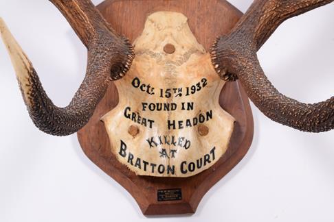 Antlers/Horns: European Red Deer (Cervus elaphus) dated Oct 15th 1932, Devon & Somerset hounds. - Image 4 of 4