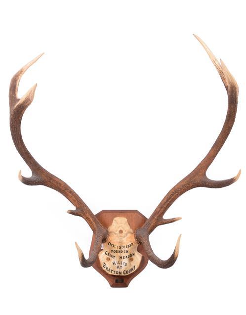 Antlers/Horns: European Red Deer (Cervus elaphus) dated Oct 15th 1932, Devon & Somerset hounds.