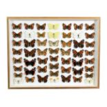 Entomology: Two Framed British Butterfly Displays, circa early-mid 20th century, a collection of