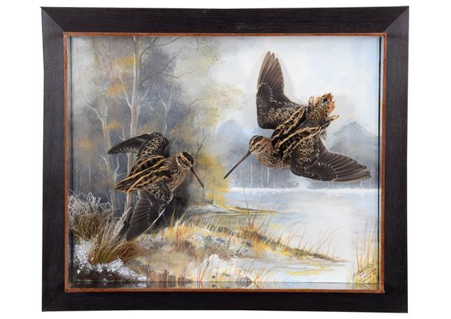 Taxidermy: A Wall Cased Common Snipe & Jack Snipe (Gallinago gallinago / Lymnocryptes minimus),