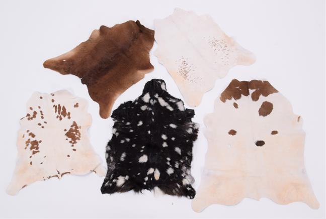 Hides/Skins: A Collection of Cow & Calf Hides, modern, a large Cow hide rug, printed as a Zebra, - Image 3 of 3