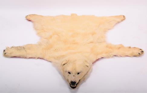 Taxidermy: Polar Bear Skin (Ursus maritimus), circa 1970, Canada, a young adult skin rug with head - Image 3 of 7