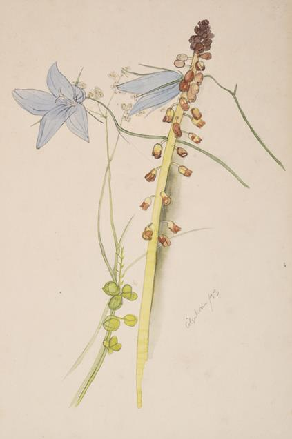 Ithell Colquhoun (1906-1988) Flower study Signed and dated (19)33, pencil and watercolour, 35.5cm by