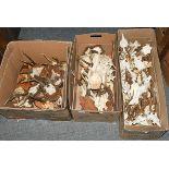 Antlers/Horns: European Roebuck (Capreolus capreolus), circa mid-late 20th century, fifteen sets