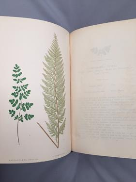 Lowe (Edward Joseph). Ferns: British and Exotic, 1st edition, mixed issues, London: Groombridge - Image 5 of 16