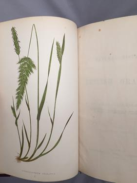 Lowe (Edward Joseph). Ferns: British and Exotic, 1st edition, mixed issues, London: Groombridge - Image 8 of 16