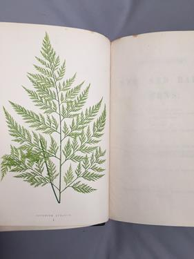 Lowe (Edward Joseph). Ferns: British and Exotic, 1st edition, mixed issues, London: Groombridge - Image 15 of 16
