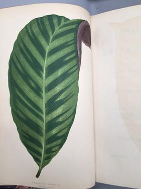 Lowe (Edward Joseph). Ferns: British and Exotic, 1st edition, mixed issues, London: Groombridge - Image 12 of 16