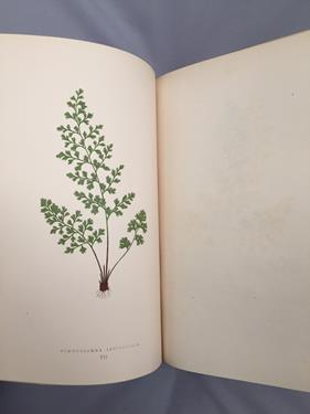 Lowe (Edward Joseph). Ferns: British and Exotic, 1st edition, mixed issues, London: Groombridge - Image 4 of 16