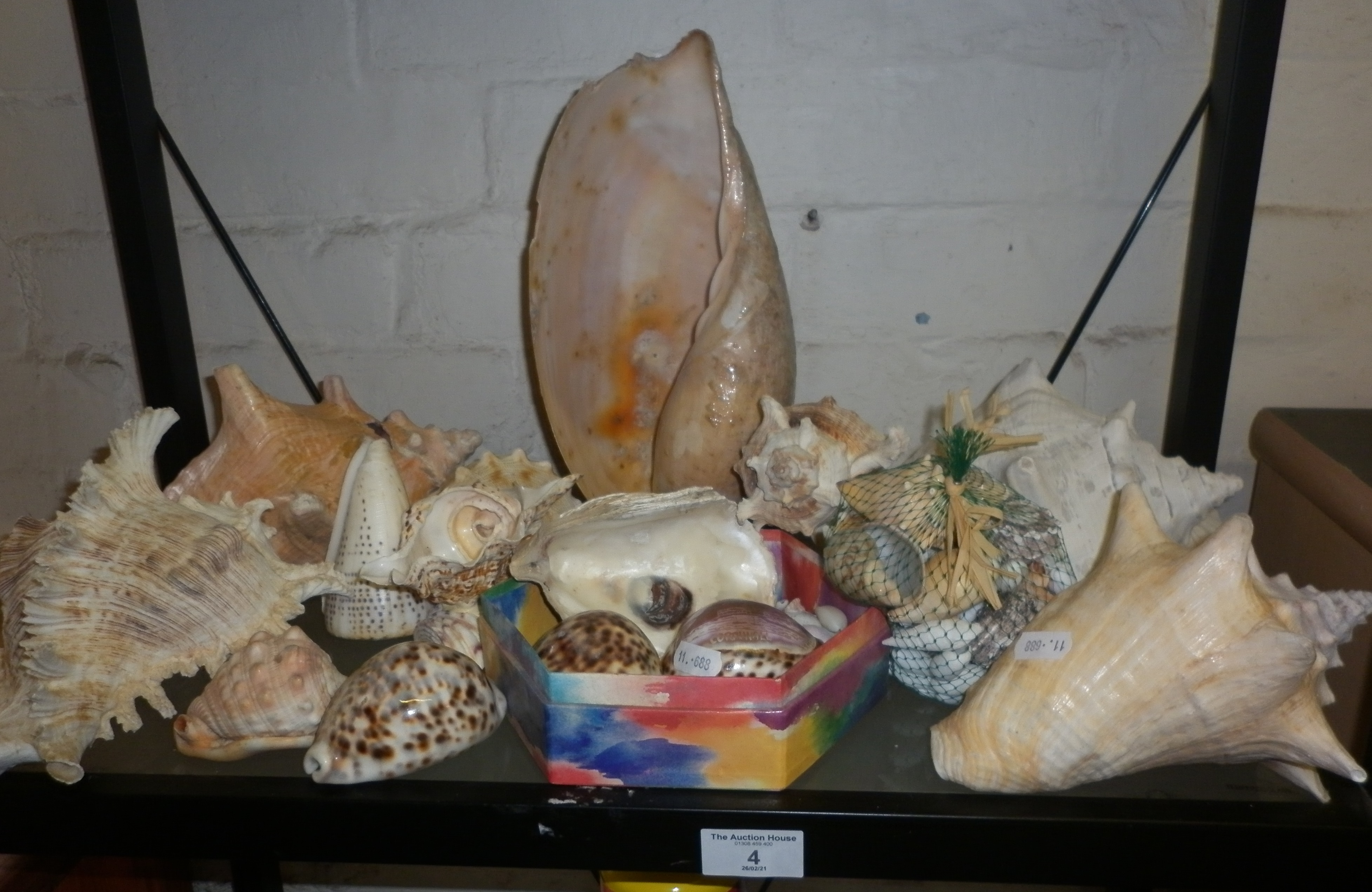 Collection of tropical sea shells