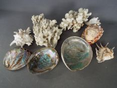Conchology - A collection of shells, one with carved cameo decoration, and coral samples.