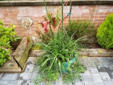 A large round planter containing a mixed selection of plants,