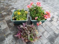 Two cuboid planters and a hanging basket,