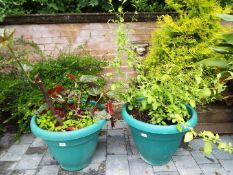 Two large round green planters with planted contents,