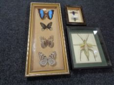 Three insect display cases containing specimens