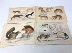 A collection of 19th century hand-coloured lithographic book plates depicting wildlife, unframed.