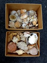 Two boxes containing a quantity of sea shells
