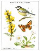 PLAYERS, A Nature Calendar, complete, large, EX, 24