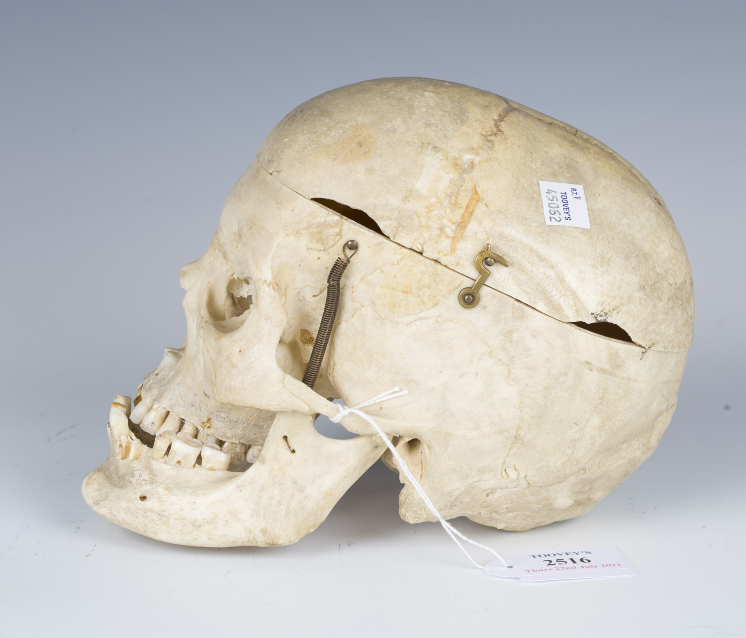 A human skull with hinged cranium and sprung jaw.Buyer's Premium 29.4% (including VAT @ 20%) of - Image 3 of 4