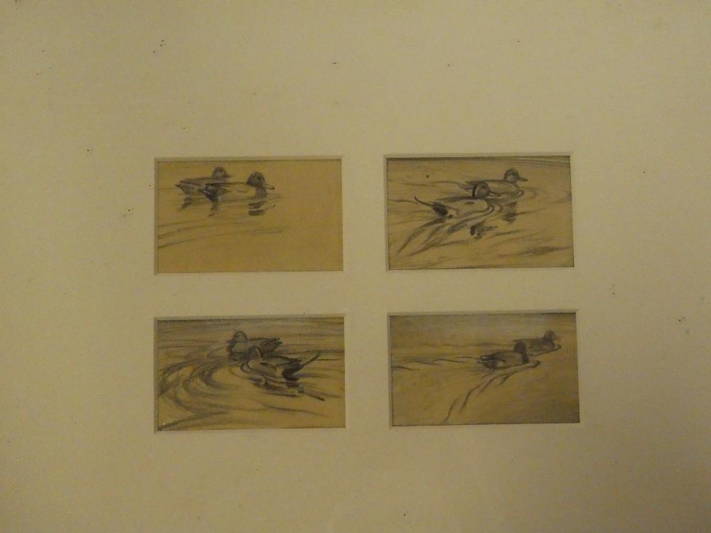 Sir Peter Scott - four pencil studies Four studies of pin tail ducks,
