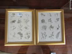 A pair of Georgian black and white botanical prints,