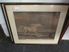"""A 19th Century print """"The Portrait of Morengo"""" Napoleon's horse, framed and glazed, and another,"""