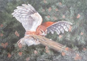"""CHRISTOPHER SCALES (XX): A framed and glazed watercolour, """"American Screech Owl""""."""