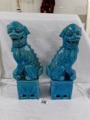 A pair of blue glazed Chinese dogs of foo, 31 cm.
