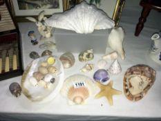 A quantity of various sea shells