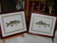 2 good pictures of fish.