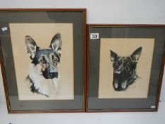Two good framed and glazed watercolours of German Shepherd/Alsation dogs by Tony Byrne, '86.
