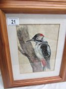 A pine framed and glazed painting of a woodpecker, image 22 x 16 cm, frame 40 x 33 cm.