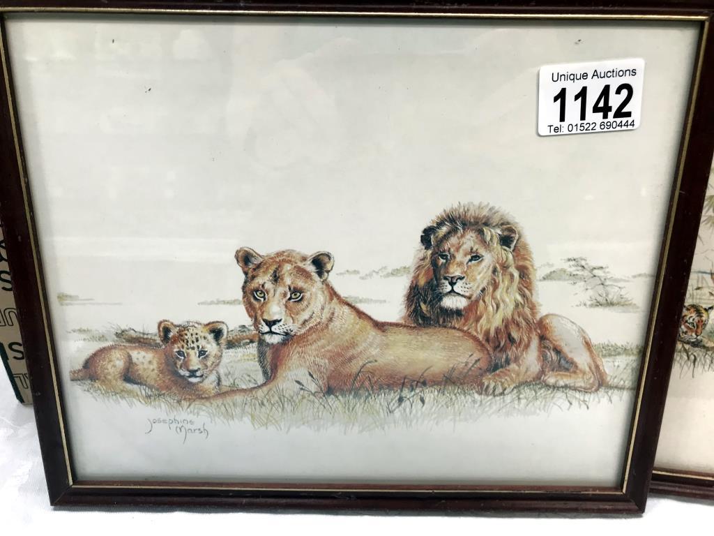 3 framed prints of big cats, tiger, - Image 4 of 8