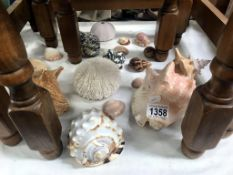 A good lot of sea shells