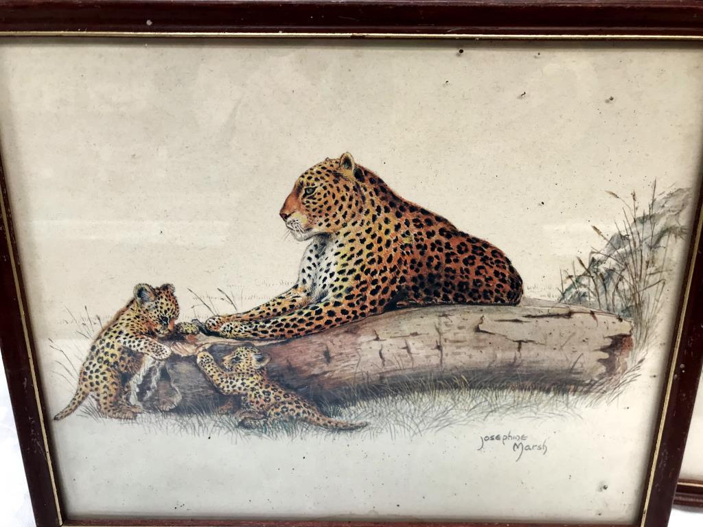3 framed prints of big cats, tiger, - Image 2 of 8