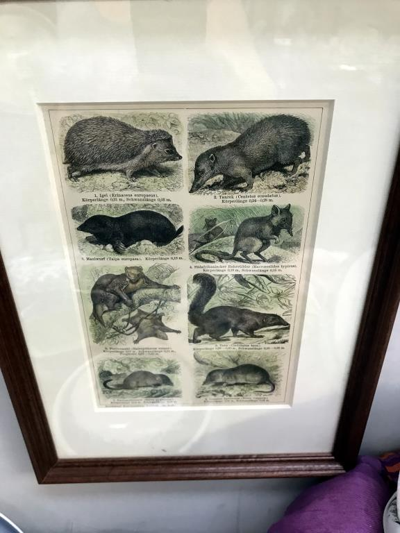 3 framed engravings including cries of London and 1 print - Image 5 of 5