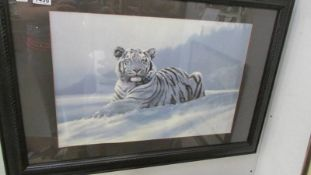 A large glazed print of a white tiger 87 x 60cm