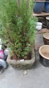 A square planter with tree.