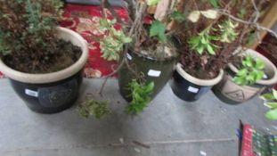 Four ceramic planters, three having plants,