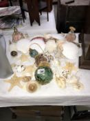 A mixed lot of sea shells & glass water float