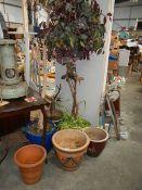 A quantity of plants and plant pots.