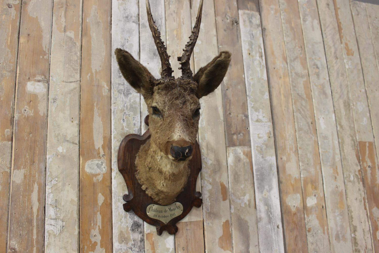 Taxidermy deer's head