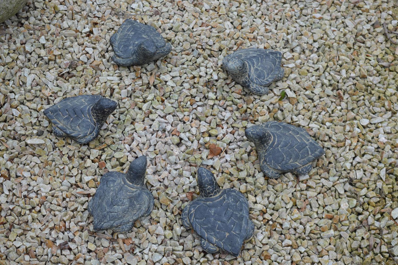 Set of six composition tortoises