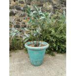Good quality early 20th C. glazed terracotta planter.